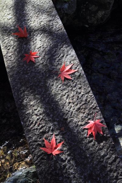 2012-11-25_0877.jpg