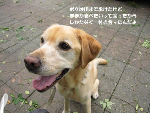 IMG_5102_20120620223813.jpg