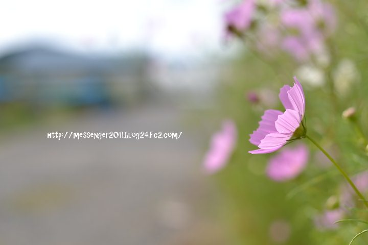 037_20120924150611.jpg