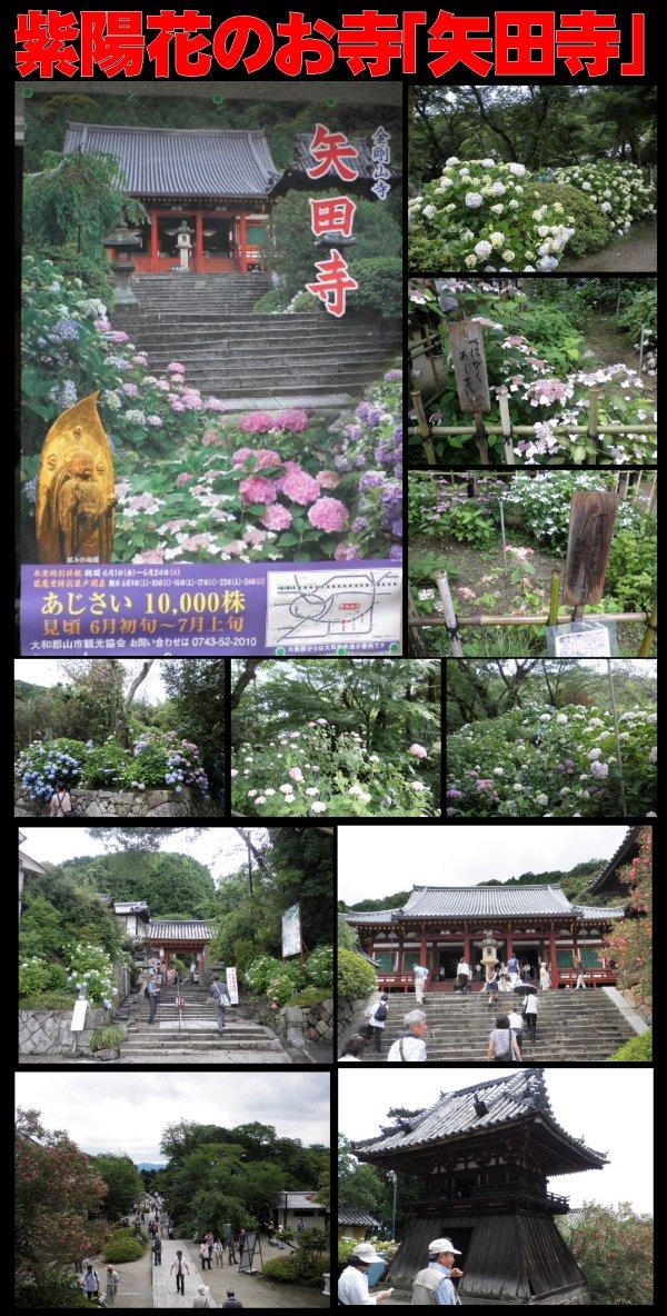 紫陽花-矢田寺
