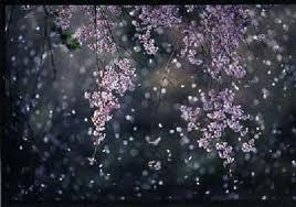 桜 花びら