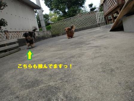 CIMG4198-1.jpg