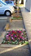 20121206 医院の花壇