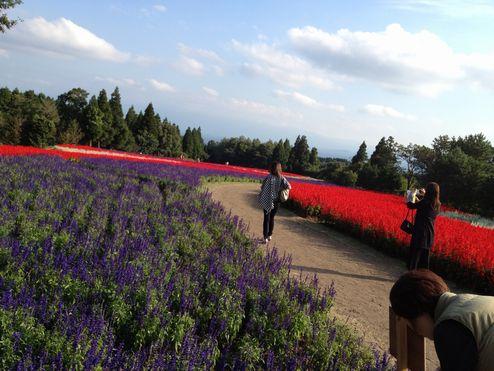 九重花公園2