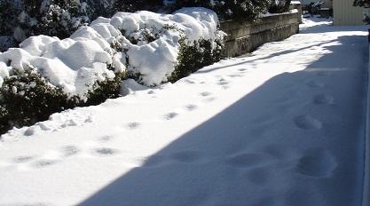 2014年2月9日 朝の風景