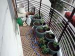 菜園1204221