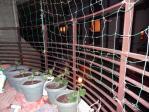 家庭菜園1205012