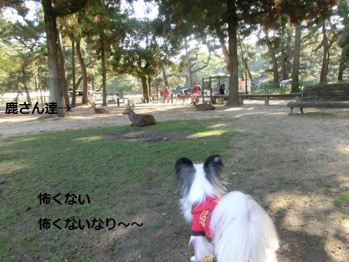 奈良公園211049