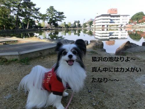 奈良公園211047