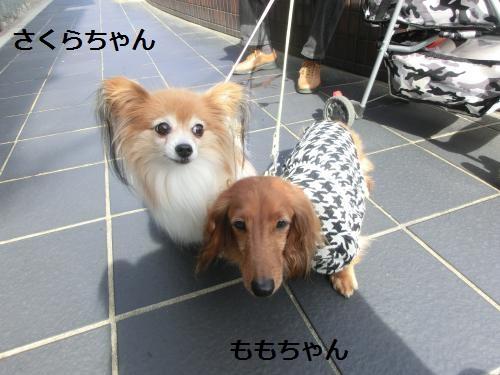 奈良公園211044
