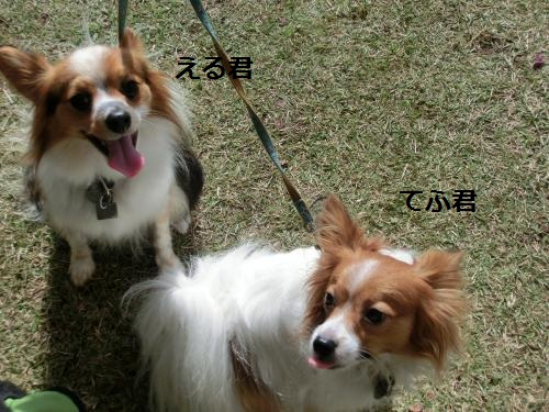 奈良公園211043