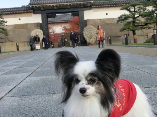 大阪城オフ2112312