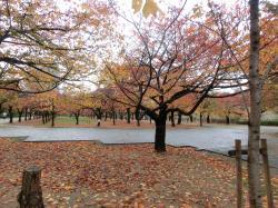 大阪城オフ211233