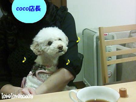DSC_0316-cocoa.jpg