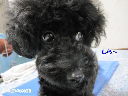 IMG_1038-cocoa_20120907195637.jpg