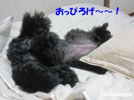 IMG_2327-cocoa_20121014132253.jpg
