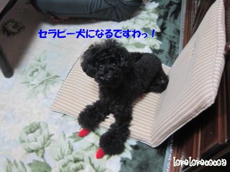 IMG_2923-cocoa_20121031180817.jpg