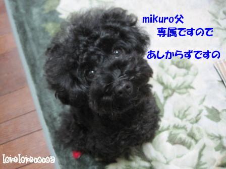 IMG_2926-cocoa_20121031180830.jpg