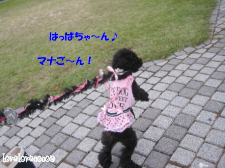 IMG_3036-cocoa_20121108205056.jpg