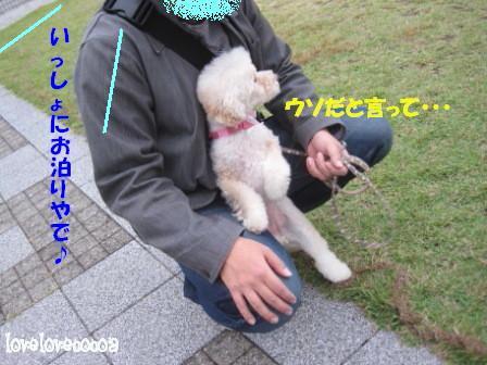 IMG_3041-cocoa_20121108205557.jpg