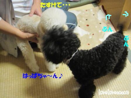 IMG_3138-cocoa_20121112213243.jpg