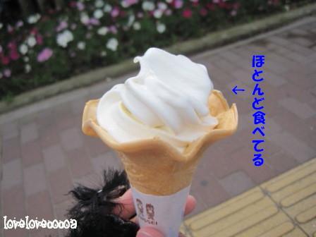 IMG_3443-cocoa_20121115214205.jpg