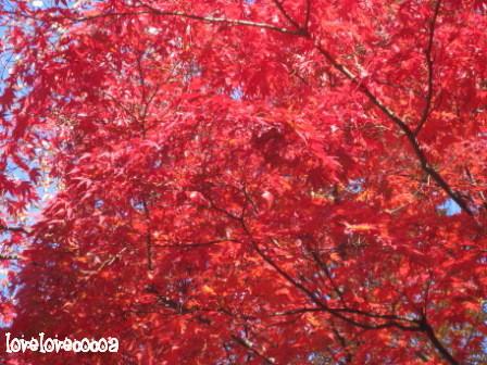 IMG_4275-cocoa_20121201002457.jpg