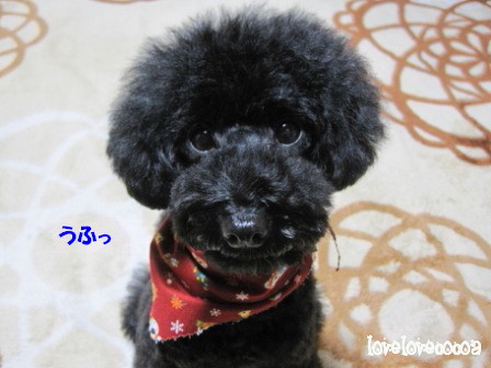IMG_4504-cocoa_20121128204018.jpg