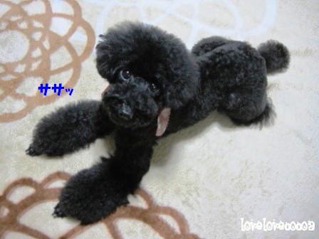 IMG_4520-cocoa_20121128204512.jpg