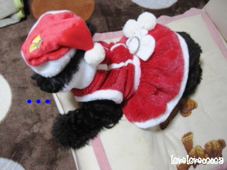 IMG_4931-cocoa_20121224232559.jpg