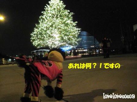 IMG_5708-cocoa_20121227195514.jpg