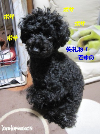 IMG_5981-cocoa_20130118141553.jpg