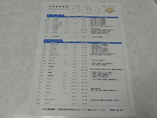 DSCN5839_convert_20130217174542.jpg