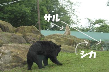 サル&クマ (2)