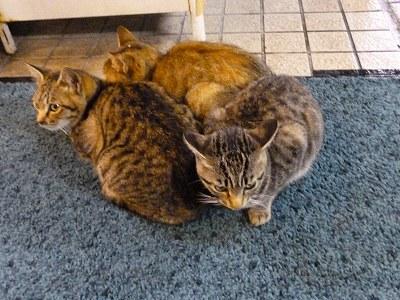 壇ノ浦の猫