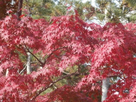 arashiyama4.jpg
