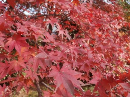 arashiyama7.jpg