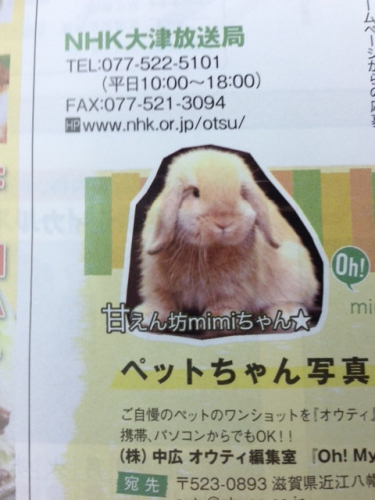 ミミちゃん2 (1)