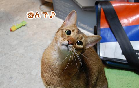 121021_なおくんとみそくん05