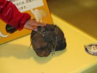2012.3.24 総合科学博物館 恐竜のフン。