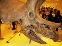2012.3.24 総合科学博物館 恐竜の骨