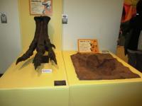 2012.3.24 総合科学博物館 恐竜の足と足跡