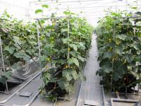 2012.5.28 愛大の農業試験場 アグリパーク2