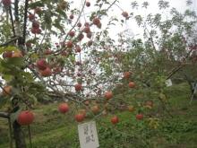 名古屋うまうま便り   -秋の味覚狩り