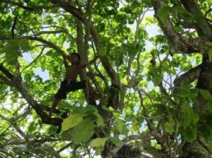 木にのぼる