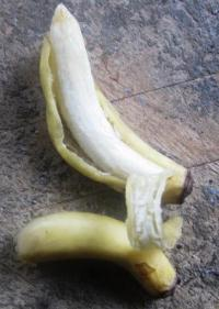 世界1小さいバナナ