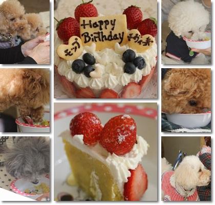 1月お誕生会ケーキにがっつくワンちゃんたち
