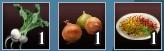 野菜のカレー4