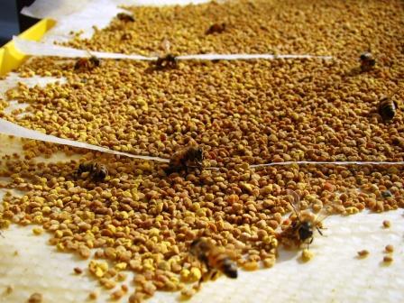 花粉とミツバチ