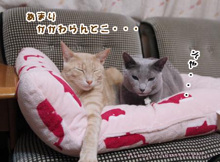 ちゃちゃ&スバル3